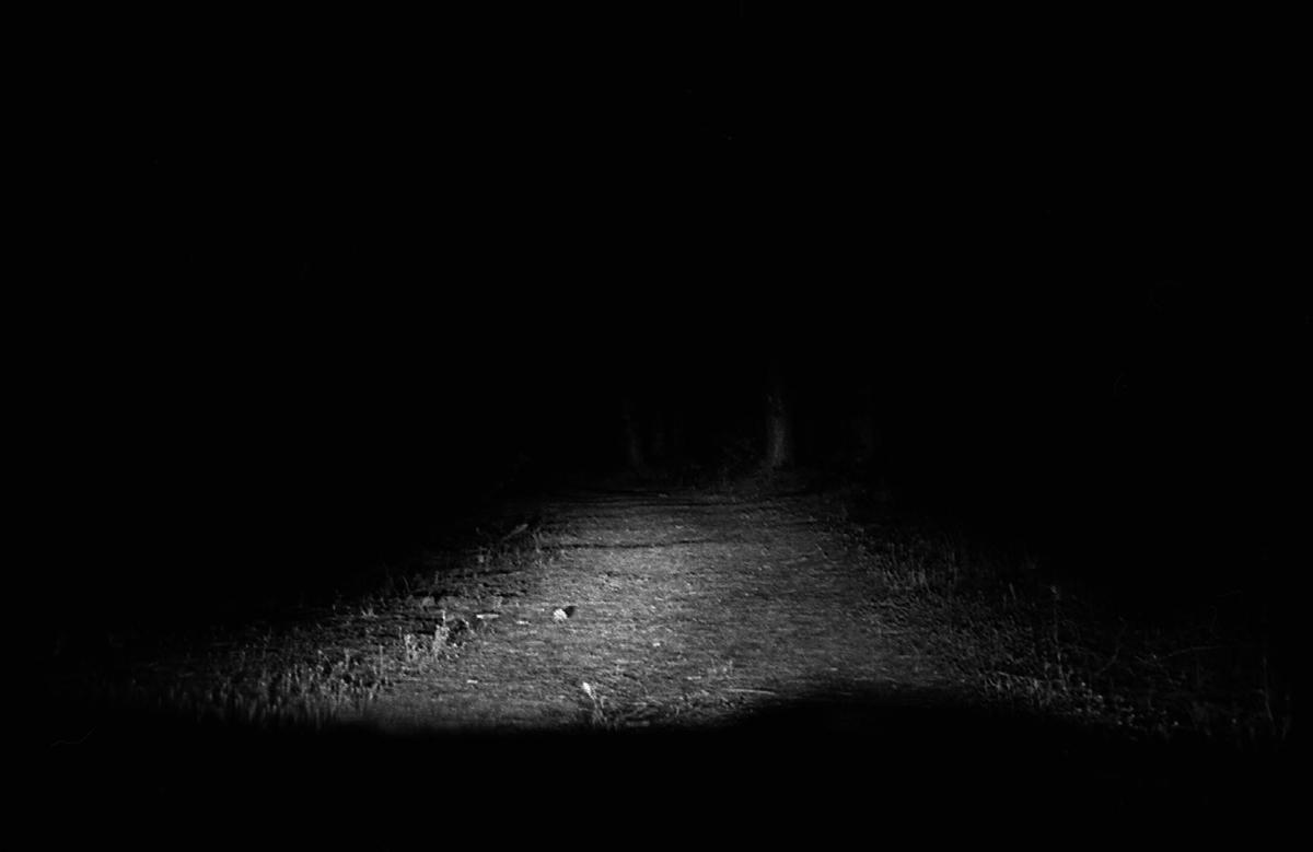 La Route du Sanglier