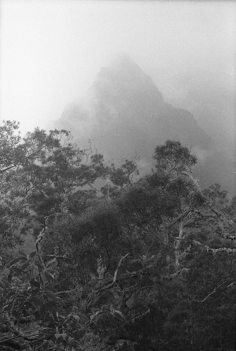 Les mauvais buissons et la montagne patiente